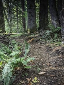 hiking forest trail