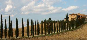 Italy - Italian Cypress Tuscany